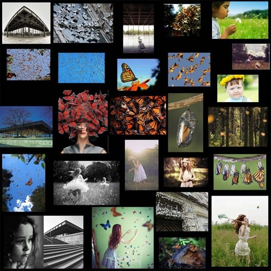 01-05_butterfly collage