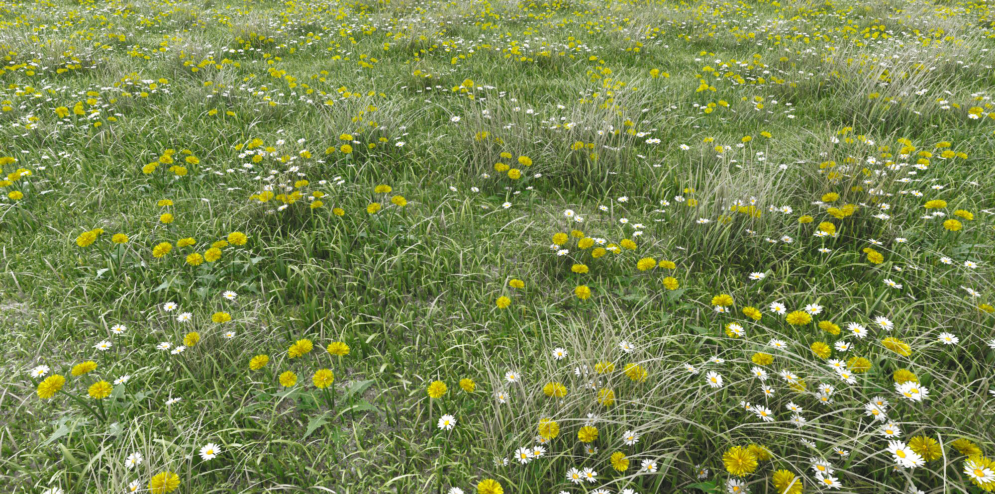The Meadow - Grass close up